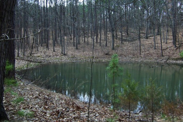 Stock and Wildlife pond, on the Ozark and Berryman Trail