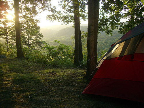 Morning light falls on a wooded campsite with tent at Pines Overlook at Red Bluff Campground.