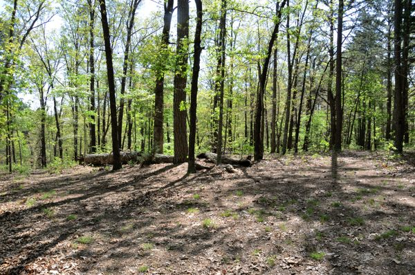 Woodland trails converge on a ridgetop at Piney Creek Wilderness in Barry county Missouri.