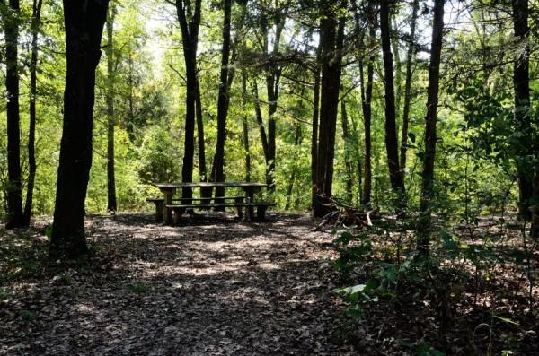 Campsite at Coy Bald Trailhead, Hercules Glades Wilderness