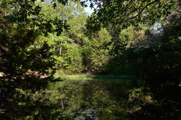 Stock Pond by the Devil's Den West Trail