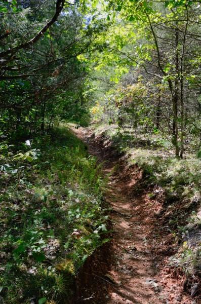 Rock Spring Trail near Long Creek Falls