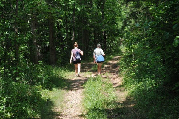 On the trail at Busiek State Forest
