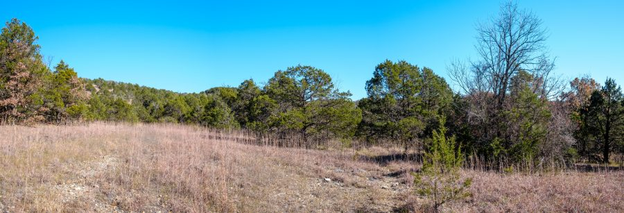 Picture of a Glade on the Upper Pilot (Devil's Den East) Trail. Hercules Glades Wilderness.